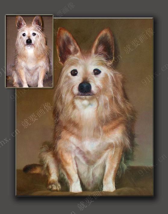 狗狗画像狗狗可爱瞬间的最好诠释